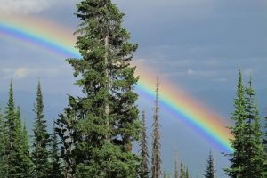 Selkirk Conservation Alliance Rainbow