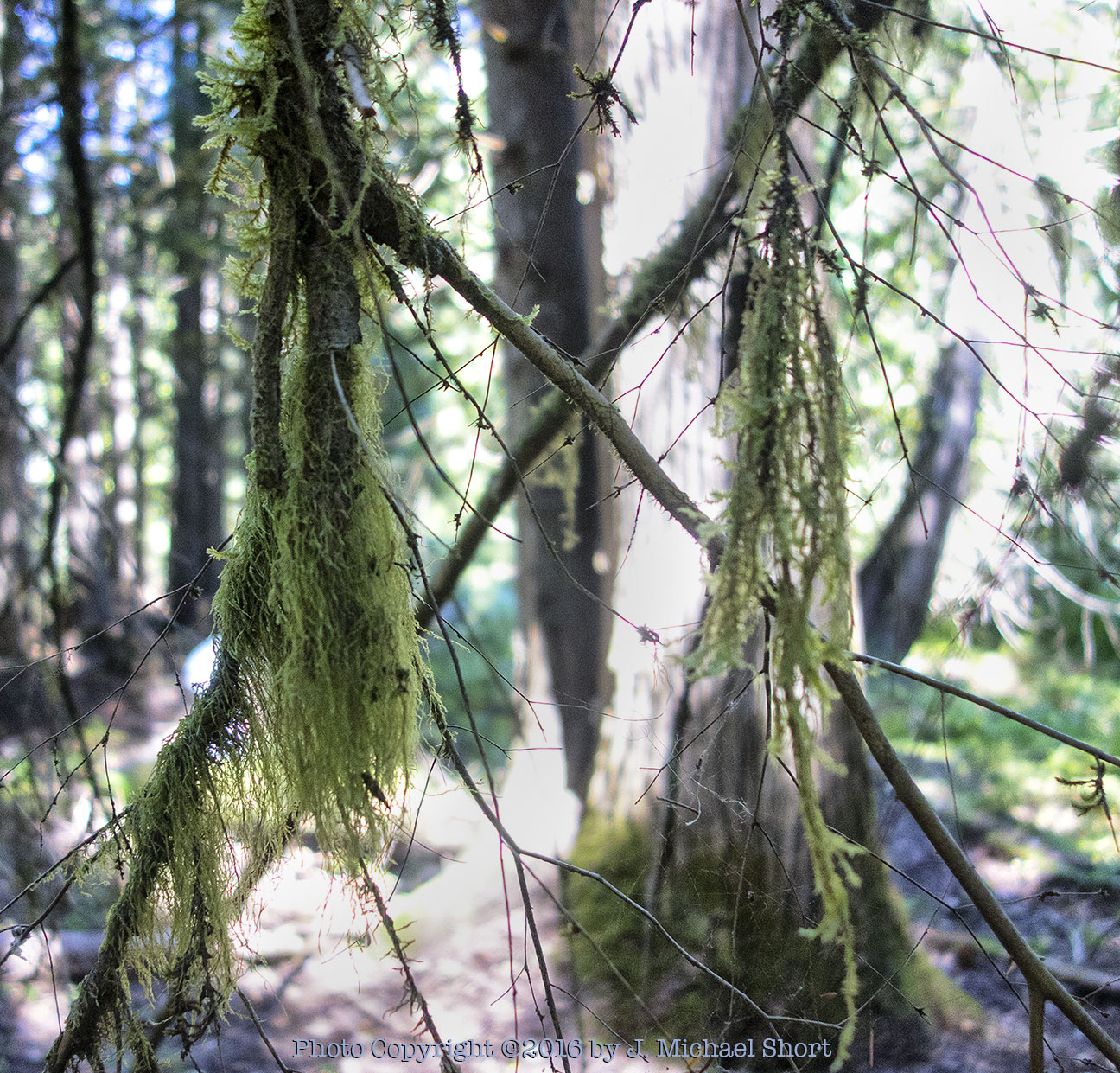 Court rules in favor of suspending the Hanna Flats timber sale