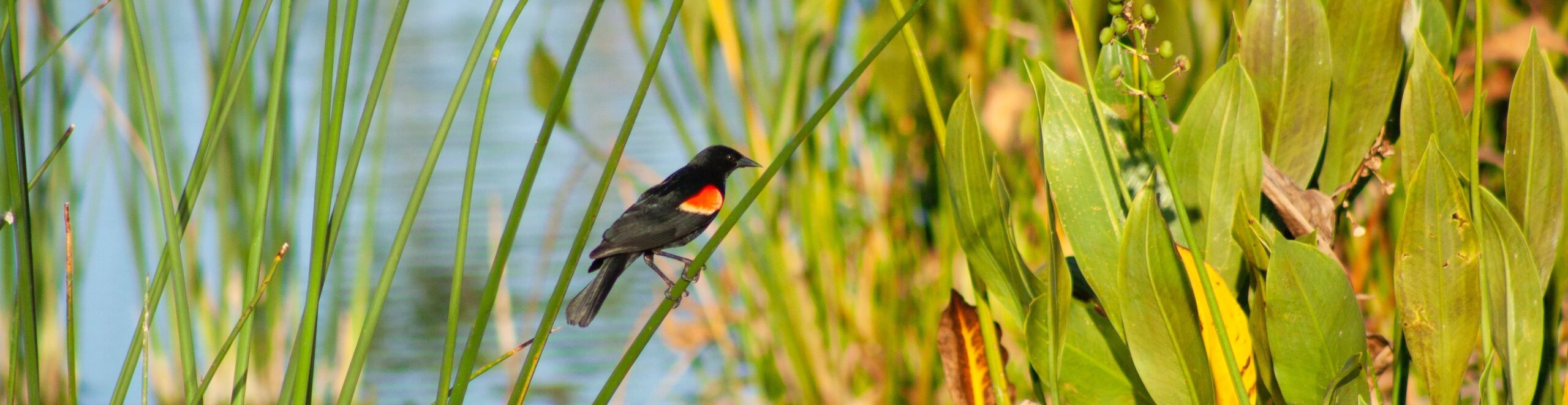 Please sign SCA's Petition to STOP development of the  COOLIN-WARREN WETLANDS, south Priest Lake, Idaho